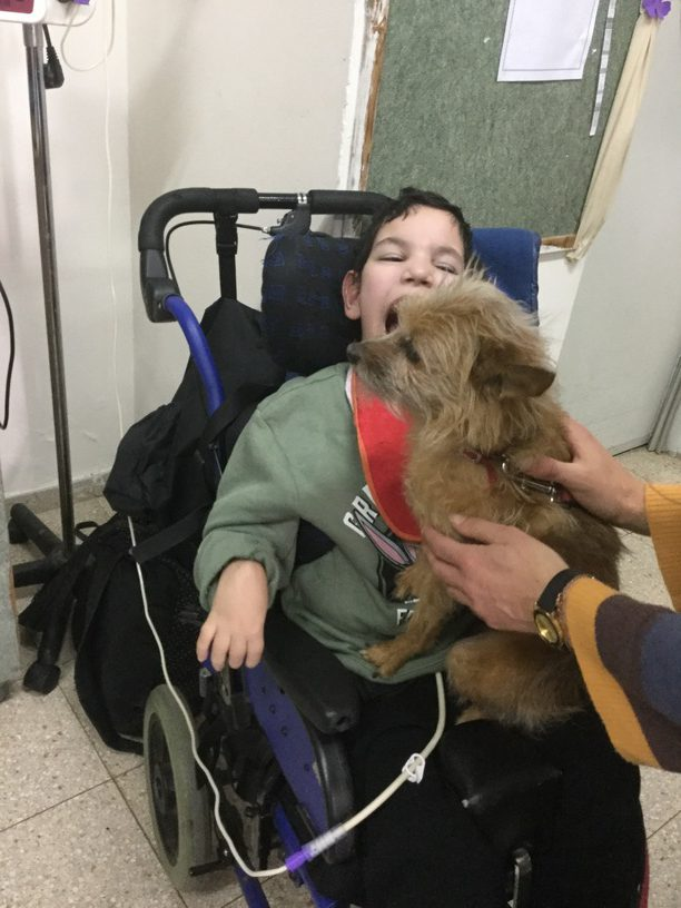 Animal Therapy For Special Needs
